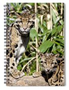 Clouded Leopards Spiral Notebook