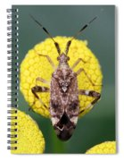 Clouded Plant Bug On Tansy Spiral Notebook