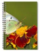 Clouded Sulphur Butterfly Spiral Notebook