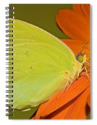 Cloudless Sulphur Butterfly Spiral Notebook