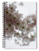 Clouds Of Soft Pink Blossoms - A Tribute To Spring Spiral Notebook