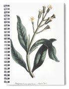 Clove Eugenia Aromatica Spiral Notebook
