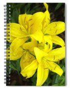 Cluster Of Yellow Lilly Flowers In The Garden Spiral Notebook