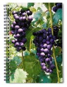 Clusters Of Red Wine Grapes Hanging On The Vine Spiral Notebook