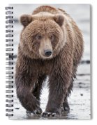 Coastal Brown Bear A Walk On The Beach Spiral Notebook