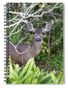 Coastal Deer Spiral Notebook