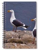 Coastal Seagulls Spiral Notebook