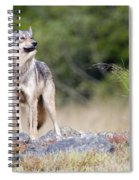 Coastal Wolf Spiral Notebook
