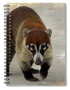 Coatimundi 2  Spiral Notebook
