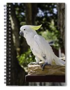 Cockatoo White Parrot Spiral Notebook