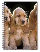 Cocker Spaniel Puppies Spiral Notebook