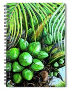 Coconut Tree   Sold Spiral Notebook