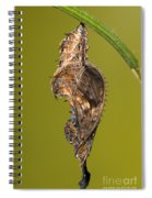 Cocooned Zebra Longwing Butterfly Spiral Notebook
