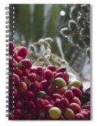 Cocos Nucifera - Niu Mikihilina - Palma - Niu - Arecaceae -  Palmae Spiral Notebook