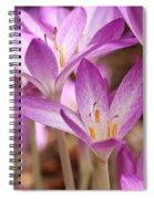 Colchicum Curves Spiral Notebook