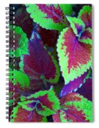 Coleus Color Spiral Notebook