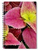 Coleus Colorfulius Spiral Notebook