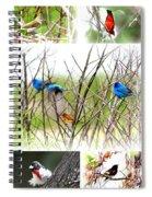 Collage Of Indigos 10 Spiral Notebook