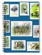Collage Of Dauphin Island 22 Spiral Notebook