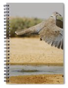 Collared Dove  Spiral Notebook