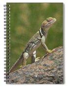 Collared Lizard Spiral Notebook