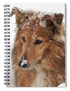 Collie In The Snow Spiral Notebook