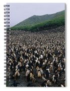 Colony Of Royal Penguin Eudyptes Spiral Notebook