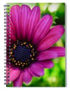 Color Madness Spiral Notebook