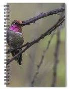 Color On A Branch Spiral Notebook