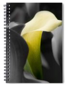 Color On Black And White Spiral Notebook