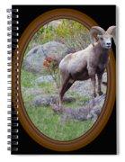 Colorado Bighorn Spiral Notebook