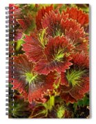 Colorful Coleus Spiral Notebook