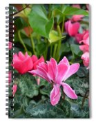 Colorful Cyclamen Spiral Notebook