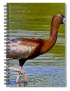 Colorful Glossy Ibis Spiral Notebook