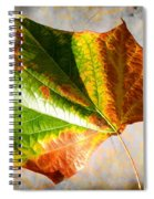 Colorful Leaf On The Ground Spiral Notebook