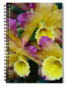 Colorful Orchids Spiral Notebook