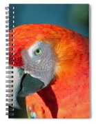 Colorful Parrot Spiral Notebook
