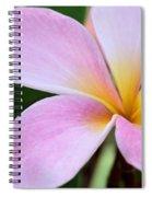 Colorful Pink Plumeria Flower Spiral Notebook