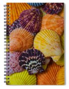 Colorful Shells Spiral Notebook
