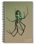 Colorful Spider In The Swamp Spiral Notebook