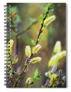 Spring Pussy Willows Spiral Notebook