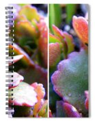 Colorful Succulents In Stereo Spiral Notebook