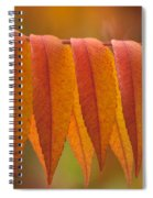 Colorful Sumac Foliage In Fall Spiral Notebook