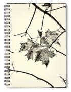 Colorless Autumn Spiral Notebook