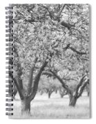 Colorless Cherry Blossoms Spiral Notebook