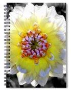 Colorwheel Spiral Notebook