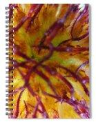 Colour Convolution Spiral Notebook