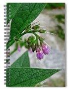 Comfrey Spiral Notebook