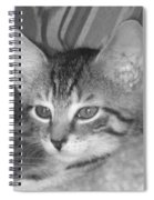 Comfy Kitten Spiral Notebook