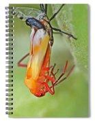 Coming Of Age - Large Milkweed Bug - Oncopeltus Fasciatus Spiral Notebook
